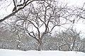 Парк Заріччя у Хмельницькому. Фото 11.jpg