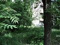 Парк шума Гази Баба во мај (19).JPG