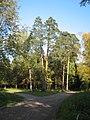Перекрёсток дорог в парке Сильвия (Гатчина) около Фермы.jpg