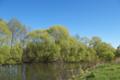 Склон реки Гнилуши 1.tif