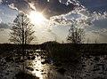 Сутінки на Бондарівському болоті.jpg