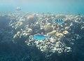 דגים בסלע משה.jpg