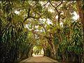 طريق جنة الاشجار.jpg