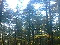 जंगल.jpg