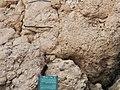 'Ayn Fashkhah, Einot Tzukim, Dead Sea, Palestine03.jpg