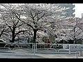 多摩センター駅裏 - panoramio.jpg