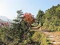 枫叶正红 - panoramio.jpg