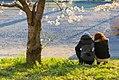 権現堂公園 (26989820298).jpg