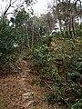 牛山溪登山道 - Niushanxi Mountain Trail - 2015.01 - panoramio.jpg