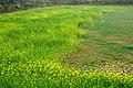 英德田园之旅 - panoramio (4).jpg