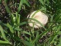 ... mushroom (4746674004).jpg