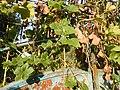 0169jfSabang Chapels Caingin Pantubig San Rafael Plants Bulacanfvf 38.JPG