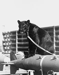 "13th Tactical Fighter Squadron, ""Panther Pack.JPEG"