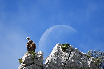 170519-4123-Voltor amb Lluna.jpg