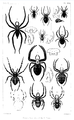 1847 BostonJournal NaturalHistory v5 illus11.png
