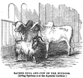 1862 cows Aquarial and ZoologicalGardens Boston Ballous.png