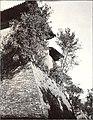 1907年9月11日岱岳周围的大墙和墙上的野生酸枣树.jpg