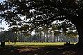 1 Redfern Park1.JPG