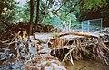 20020908305AR Spechtritz (Rabenau) Hochwasser Rote Weißeritz.jpg