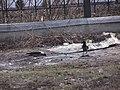2005-2010. Птицы Донецка (C-740) 76.jpg