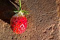 2013-365-243 Fresh Strawberry (9643270902).jpg