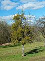 2014-02-17 13-15-24 tree-gui.jpg