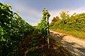2017-07-07 23-40-06 vignes-osenbach.jpg