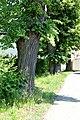 """2018-05-26 ND """"Lindenallee"""" in Blankenhain (Crimmitschau), Sachsen 03.jpg"""