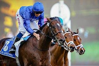 Blue Point (horse) Irish-bred Thoroughbred racehorse