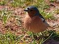2021-04-03 11-32-24 oiseau.jpg