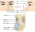 2302 External Nose.jpg