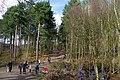 25.3.16 Delamere Forest 10 (25429452474).jpg