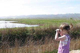 Young girl looks through binoculars towards marsh