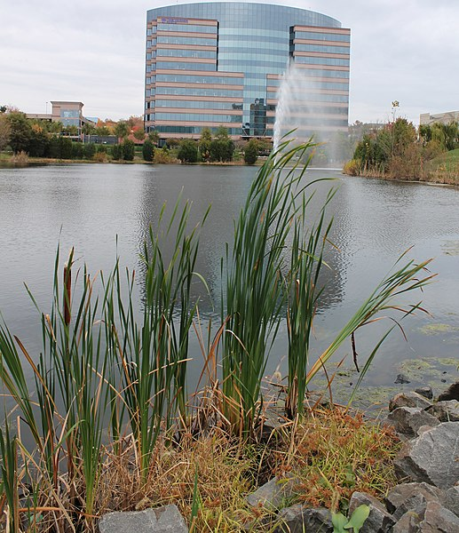 Cassidy Turley Property Management Sacramento