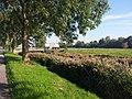 3646 Waverveen, Netherlands - panoramio (54).jpg