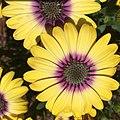 3 Yellow Flowers.jpg
