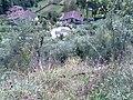 55051 Barga LU, Italy - panoramio - jim walton (1).jpg