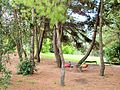 AN Parco Belvedere alberi e giochi.JPG