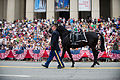 A U.S. Soldier with the 3rd U.S. Infantry Regiment (The Old Guard) escorts a riderless horse during the 2013 National Memorial Day Parade in Washington, D.C., May 27, 2013 130527-A-AO884-129.jpg