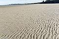 A Visit To Sandymount Strand (6050703455).jpg