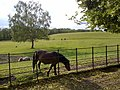 A field with ponies and donkeys - geograph.org.uk - 1962346.jpg