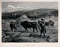A man with yoked oxen is threshing the corn. Engraving by C. Wellcome V0039597.jpg