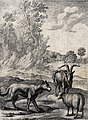 A wolf and a lamb are standing in a wooded landscape with a Wellcome V0023029.jpg