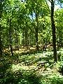 Abbots Wood - geograph.org.uk - 202959.jpg