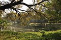 Acharya Jagadish Chandra Bose Indian Botanic Garden - Howrah 2011-01-08 9833.JPG