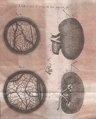 Frederik Ruysch - Illustration of critique of Thesaurus anatomicus... published in Acta Eruditorum, 1704
