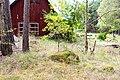 Adelsö 97-1.jpg