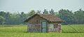 Agricultural Hut - Beliaghata - Taki Road - North 24 Parganas 2015-04-11 7109.JPG