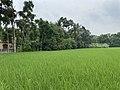 Agriculture land located at Gadamara.jpg