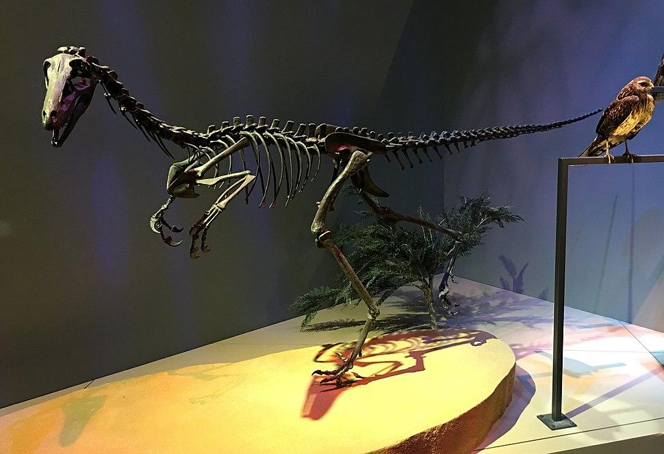 Alaskan troodont
